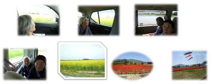 ドライブ(チューリップ畑・菜の花畑)
